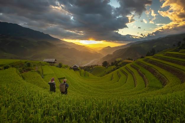 Terrazas de arroz en la mañana de la temporada de cosecha en el norte de mu cang chai, yenbai, vietnam.