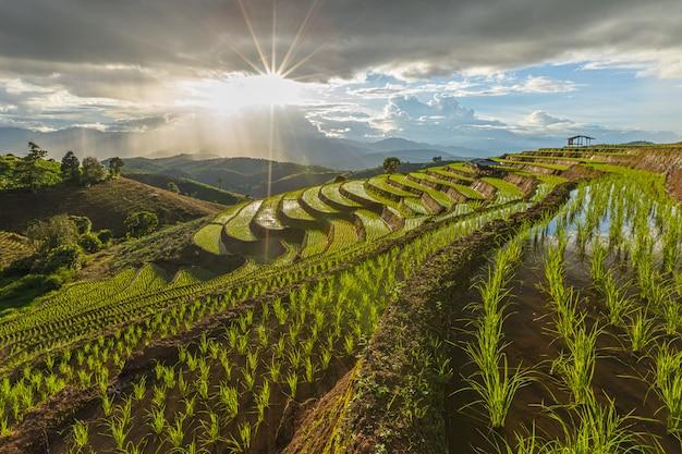 Terrazas de arroz de pa bong piang en la temporada de lluvias, chaingmai, tailandia