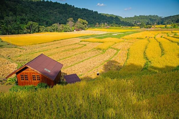 Terrazas de arrozales en mae klang luang, homestay chiangmai, tailandia
