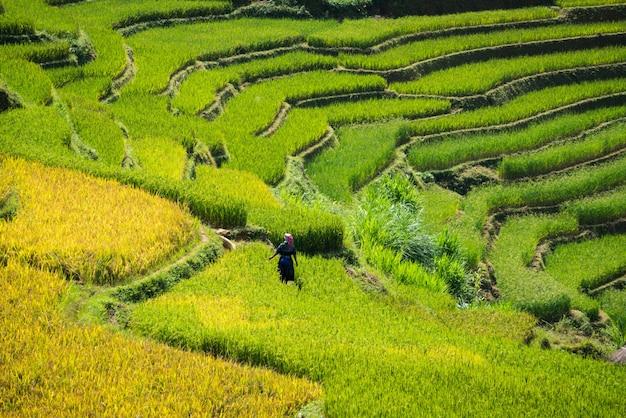 Terrazas de campo de arroz en mu cang chai, vietnam