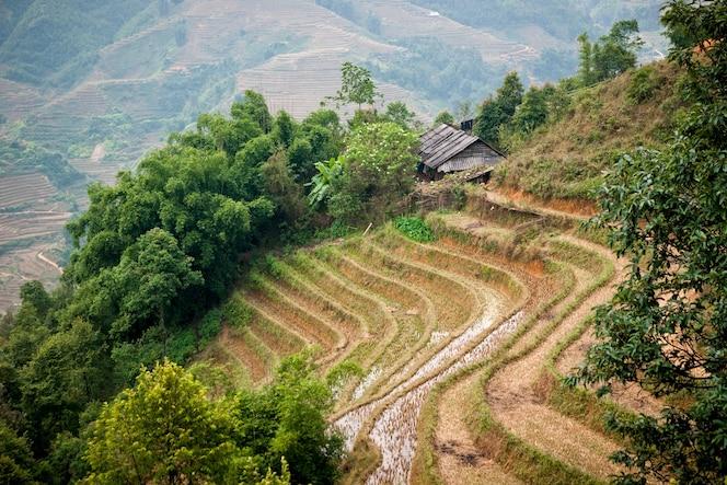 Terrazas para el cultivo de arroz irrigadas por los agricultores vietnamitas en las montañas