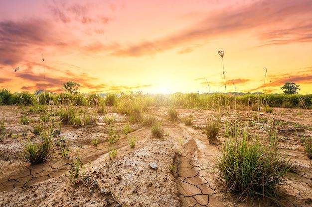 Terreno con tierra seca o textura de tierra agrietada y hierba sobre fondo de cielo naranja