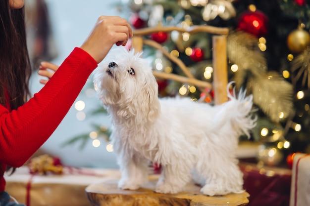 Terrier blanco pequeño en tronco con árbol de navidad.
