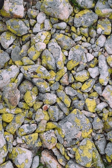 Textrure de liquen amarillo sobre fondo de piedras grises