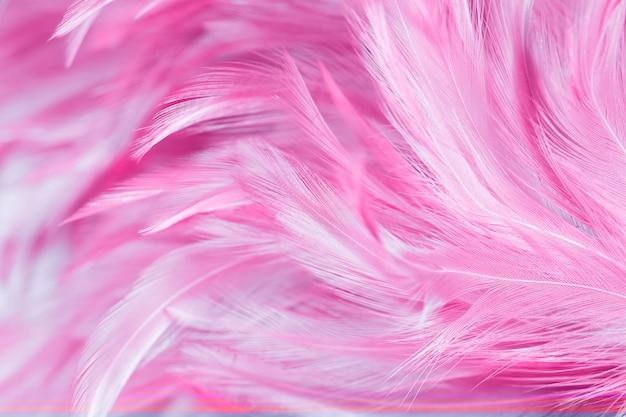 Textura abstracta de la pluma de los pollos para el fondo