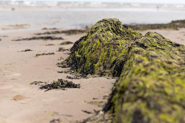 Textura de algas cerca de la costa del golfo de riga jurmala