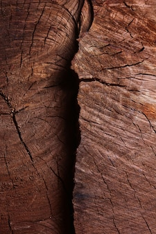 Textura de árbol viejo
