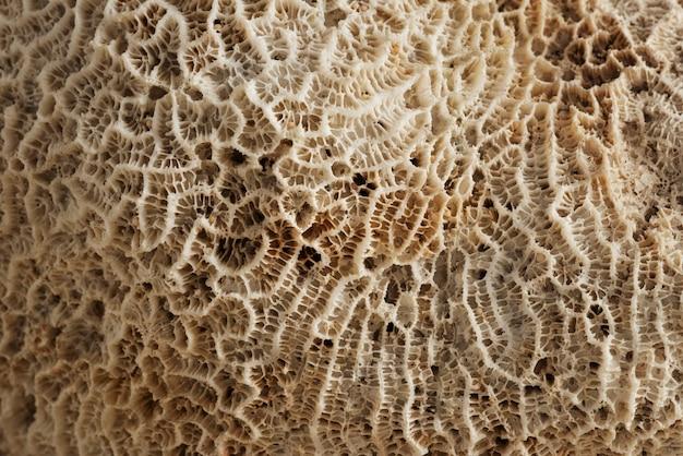Textura de coral natural de primer plano beige