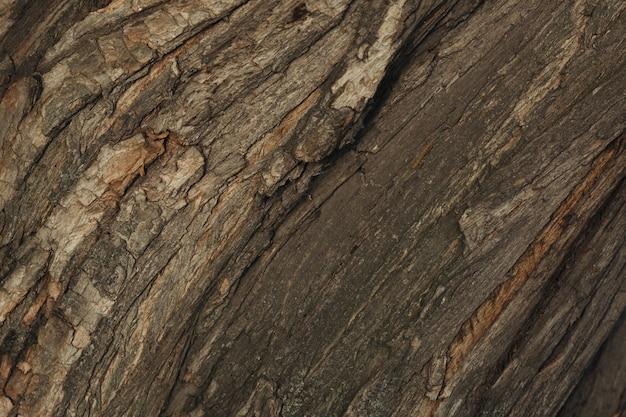 Textura de corteza de árbol de cerca