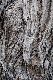 Textura de corteza de árbol de madera vieja de cosecha rústica