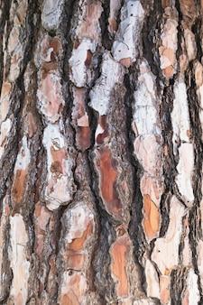 Textura de corteza de árbol de primer plano