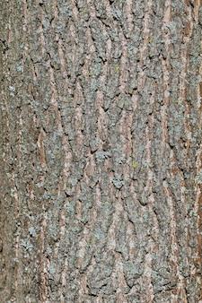 Textura de corteza de pino