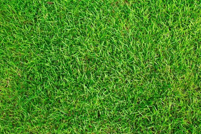 Textura pasto fotos y vectores gratis for Tipos de cesped natural para jardin