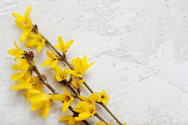 Textura de estuco con ramitas de flores amarillas de primavera. burlarse de su texto.