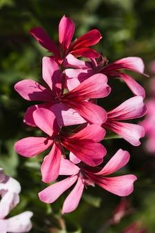 Textura de flores de cerca