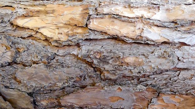 Textura de fondo de árbol, patrón de textura de fondo. vista de primer plano