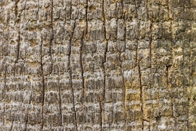Textura de fondo de corteza de árbol