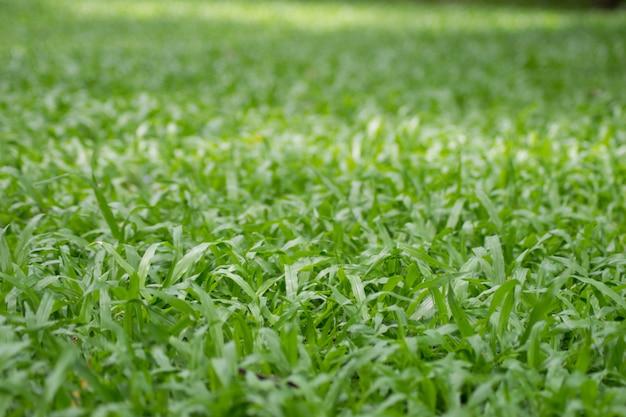 Textura de fondo de hierba verde