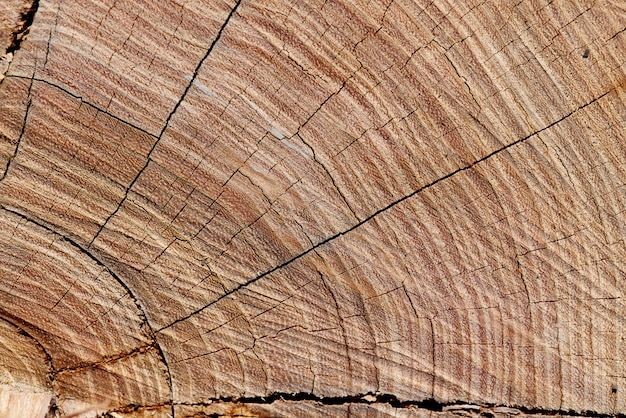 Textura del fondo de la madera vieja con el primer de las grietas.