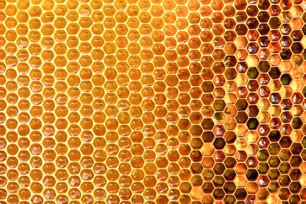 Textura de fondo y patrón de una sección de panal de cera de una colmena de abejas llena de miel dorada