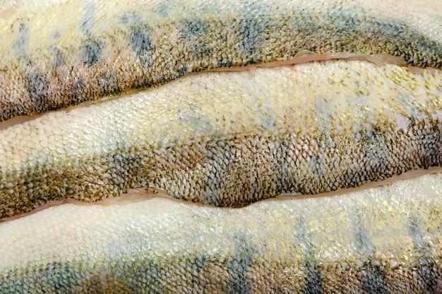 Textura de fondo de piel de merluccius