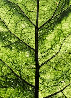 Textura de fondo verde hoja fresca de primer plano
