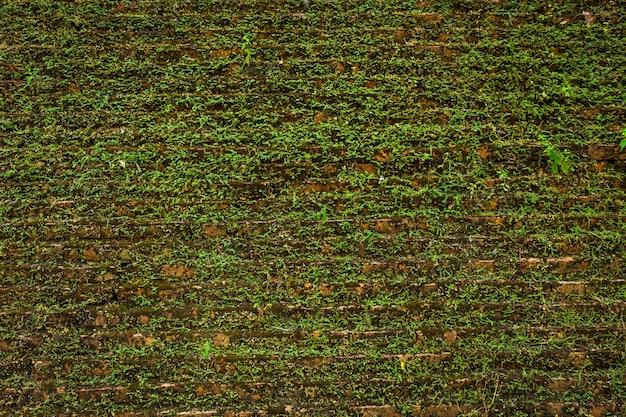 Textura grande de la pared vieja del fondo con el musgo verde.