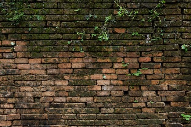 Textura grande de la pared vieja del fondo.