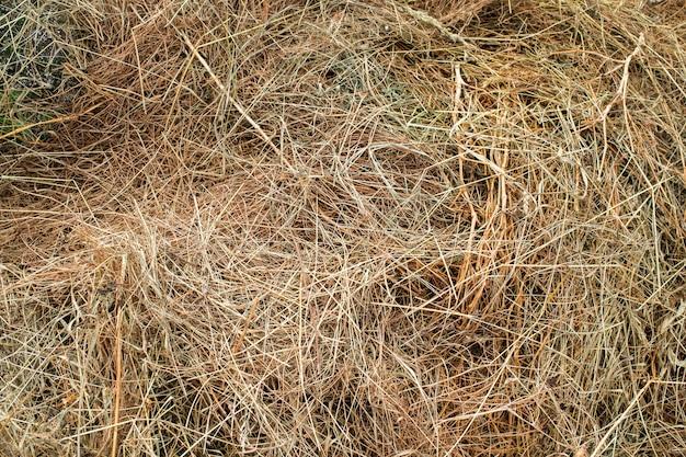 Textura de heno para la cría de animales