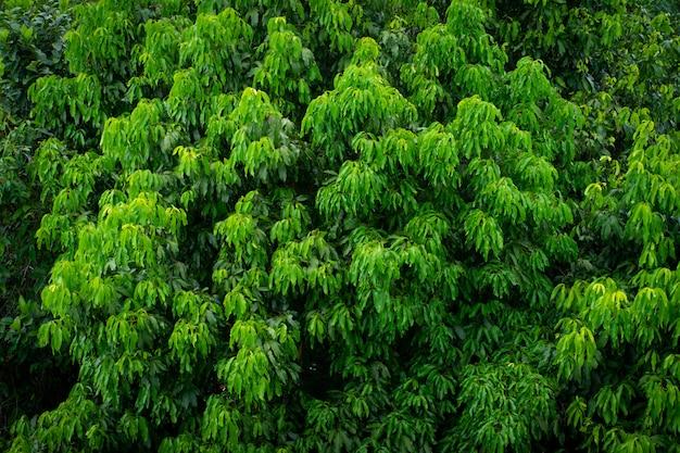 Textura de hierba de hoja verde.