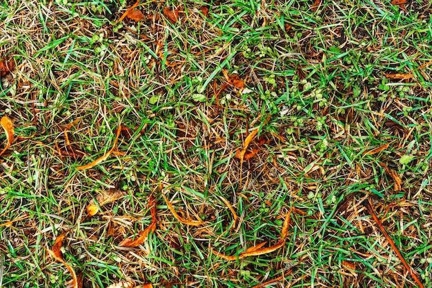 Textura de hierba verde para el fondo. patrón verde y amarillo de hierba de otoño. de cerca.