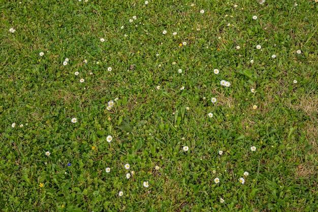 Textura de hierba verde de primavera con flores