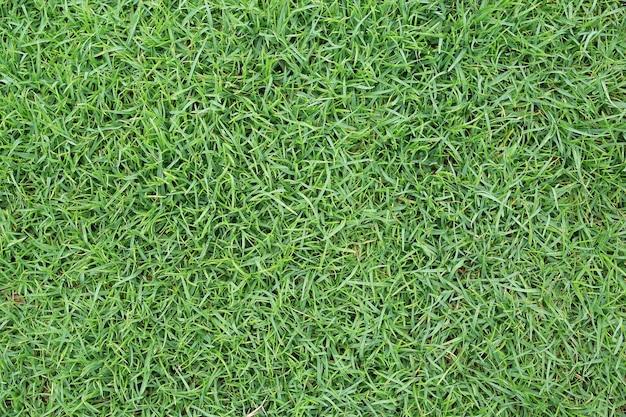 Textura de hierba verde de primer plano como fondo
