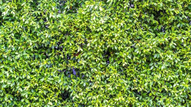 Textura de hierba verde.