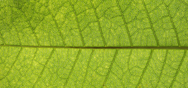 Textura de hoja verde de árbol de cerca para el fondo