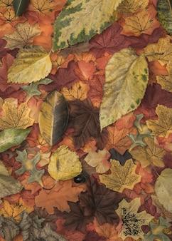 Textura de hojas de colores otoñales