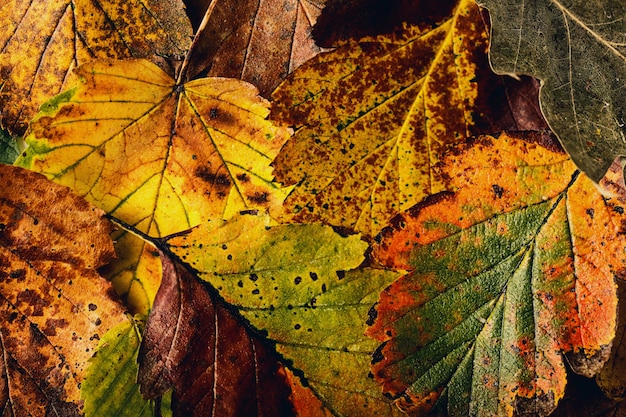 Textura de hojas coloridas