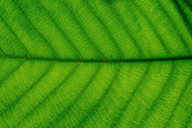Textura de hojas verdes para el fondo