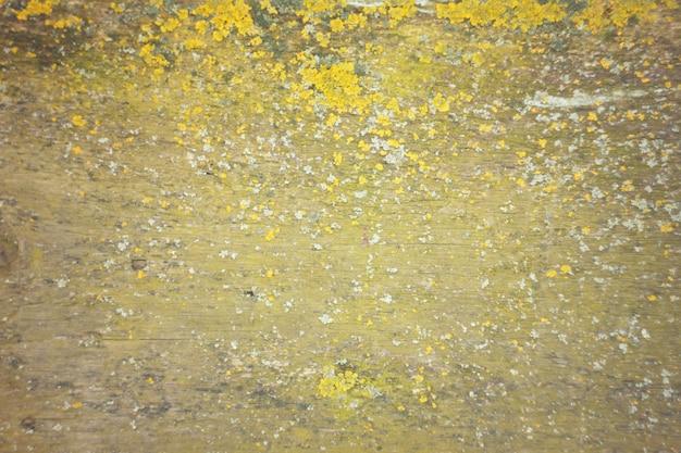La textura del hormigón con el musgo.