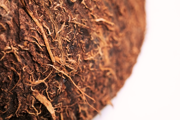 Textura macro de coco