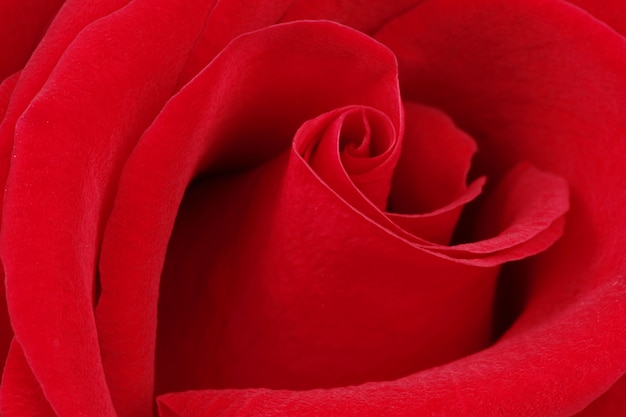 Textura macro rosa
