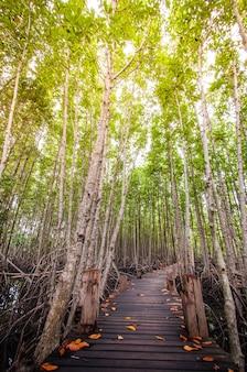 Textura de madera de la pasarela natural la carretera es verde.