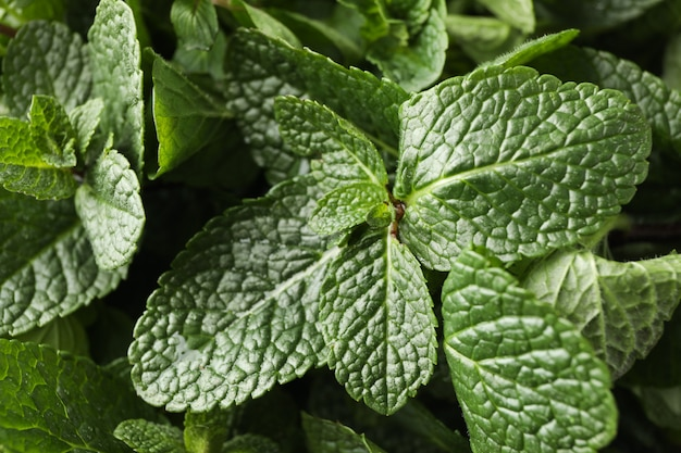 Textura de menta verde fresca, de cerca
