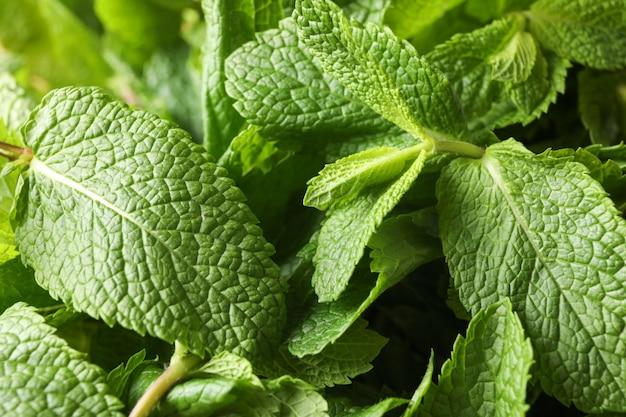 Textura de menta verde en general, de cerca