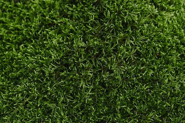 Textura de musgo verde hermosa en la naturaleza