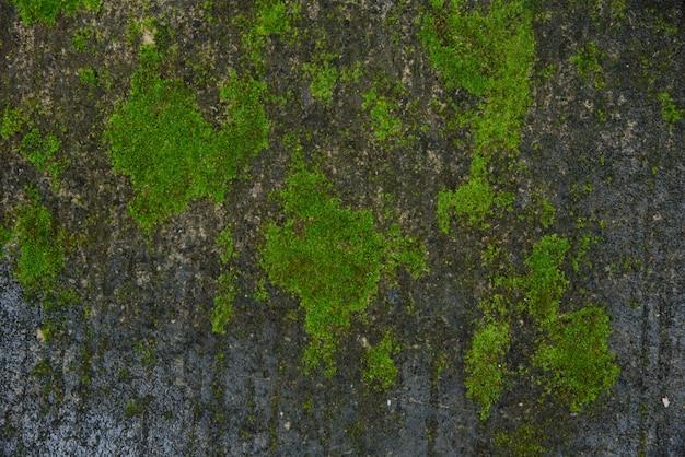 Textura de musgo verde