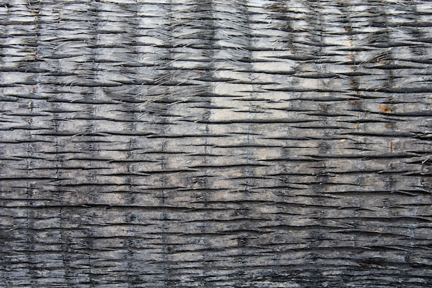 Textura de palmera. tronco de arbol.