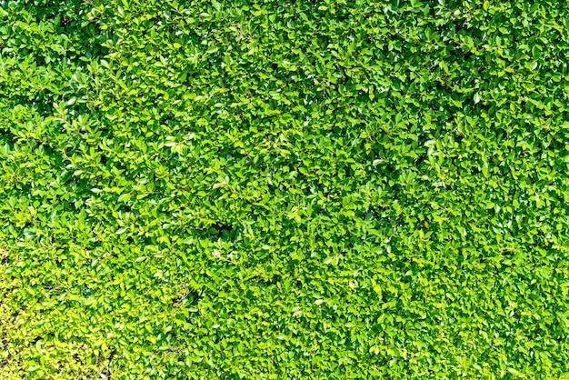 Textura de pared de árbol verde hermoso