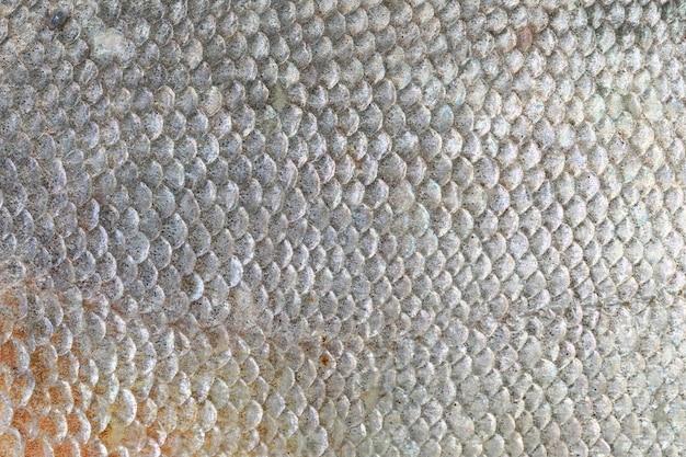 Textura de los peces pacu.