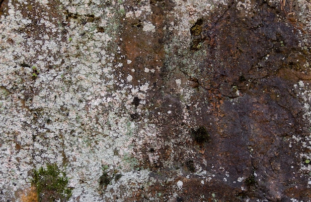 Textura de piedra con óxido y liquen. fondo orgánico.